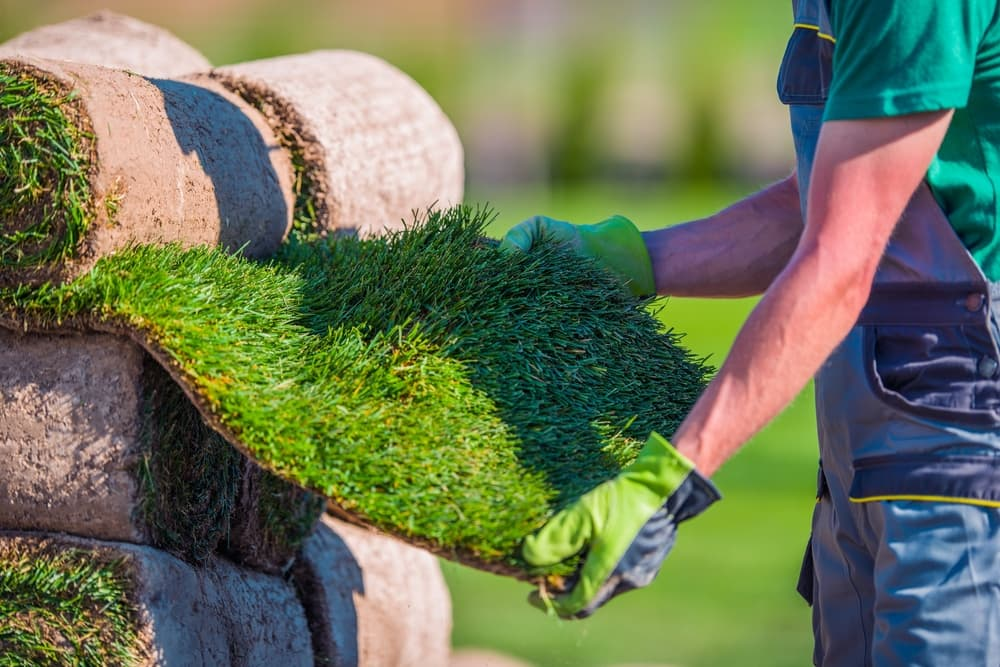 What Puts Instant Lawns Above the Competition?